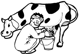Cow Coloring Pages 77