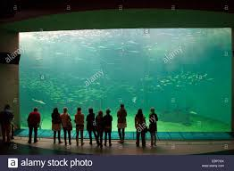 Extra Large Aquarium Ornaments by Appealing Huge Fish Tank 4 Largest Fish Tanks In A Home Large Fish