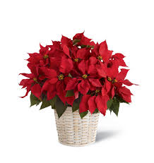 The FTD® Red Poinsettia Basket (Large) Mothers Day 2019 Order Flower Deals And Get Free Shipping Money Ftd Coupons September 2018 Second Hand Car Deals With Free Insurance Send Bouquet Flowers Mixed Bouquets Delivered Ftd Wag Coupon Code Flowers Canada Smile Brilliant November Western Digital C4d Toys R Us 20 Off October Grace Eleyae Amazon March Cheryls Cookies Proflowers Deal Of The Day Calvin Klein Safeway Shoprite Online Shopping Avas Coupon Code 6 Last Minute Delivery Sites For With Promo Codes