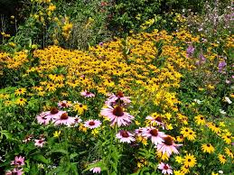 A Wildflower Garden In Your Backyard - Gardening Know How Free Images Blossom Lawn Flower Bloom Backyard Botany Go Native Or Wild News Creating A Wildflower Meadow From Part 1 Youtube Wildflower Garden Update Life In Pearls And Sports Bras Budapest Domestic Integrity Field Of Wildflowers She Shed Decorating Ideas How To Decorate Your Backyard Pics Best 25 Meadow Garden Ideas On Pinterest Rockoakdeer Neighborhood For National Week About Texas A Whole Wildflowers For Tears The Duster Today Fields Flowers Design With Apartment Balcony