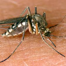 stechmücken einfache hausmittel helfen gegen lästige stiche