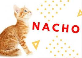 orange cat names 60 and orange cat names pethelpful