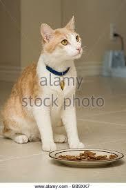 cat wont eat cat wont eat stock photos cat wont eat stock images alamy