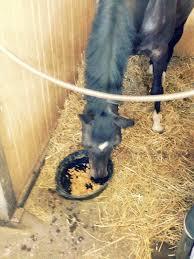 geburtstagskuchen für das pferd reitsport ch