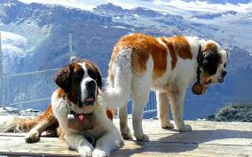 large breeds a whole lot of