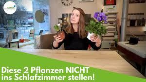 2 pflanzen die du nicht in deinem schlafzimmer haben solltest