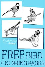 Bird Coloring Pages And All About Birds For Kids Free Printable PagesAdult