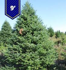 Krinner Christmas Tree Genie Xxl Canada by All U2013 Porter River Christmas Trees Calgary U0026 Central Alberta