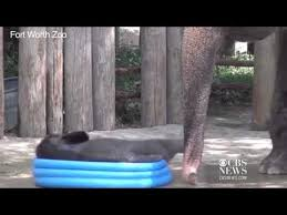 Watch Baby Elephant Cools Off In Kiddie Pool Youtube With Regard To
