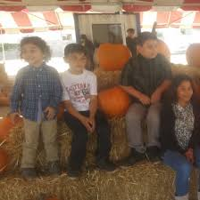 Monrovia Pumpkin Patch by Advent Pines Pumpkin Patch And Christmas Tree Lot