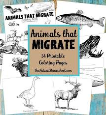 You Might Be Wondering What Kind Of Animals Migrate In Winter Well There To Download These Migration Activity Coloring Pages