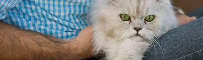 service cats animal volunteer denver community service opportunities denver