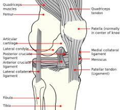 Posterior Drawer Test Knee Physiopedia