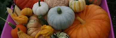 Chatham Kent Pumpkin Patches by Pumpkinmoon U2013 Do You Dare To Pick Your Own Pumpkin