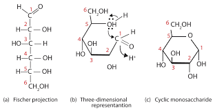 Chair Conformations In Equilibrium by 24 2 Conformations And Cyclic Forms Of Sugars Chemistry Libretexts