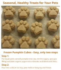 Too Much Pumpkin For Dogs Diarrhea by Best 25 Canned Pumpkin For Dogs Ideas On Pinterest Homemade Dog