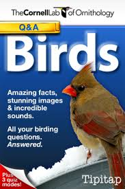 Bird App Answers Questions On Your IPhone | All About Birds Wild Birds Unlimited Common Backyard Bird Nest Idenfication Sounds Articles Old Farmers Almanac Whibreasted Nuthatch Sitta Carolinensis Birds Certhioidea Best 25 Birds Ideas On Pinterest Pretty Blue A Brown Headed Cowbird At Thicksons Woods Debunk 12 Myths About Feeding Cute Rbreasted Nuthatch Winter Of Wisconsin Species Infographic Poster By Diana Sudyka The Worlds Photos And Sviceberry Flickr Hive Mind Grow These Native Plants So Your Can Feast Audubon What I Find In My Ontario Canada Youtube