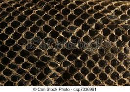 Shed Snake Skin Pictures by Stock Photography Of Shed Snake Skin Pattern Background Over Black