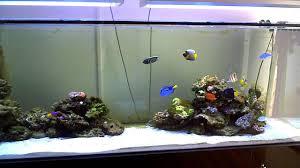 aquarium nano eau de mer fish only eau de mer