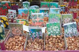 flower bulbs on sale during fair editorial stock image
