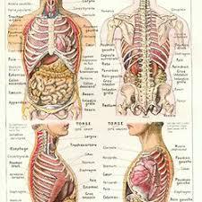 interieur corps humain femme atlas du corps humain pearltrees