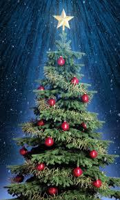 Top Live Christmas Trees by Mary Christmas Tree Christmas Lights Decoration