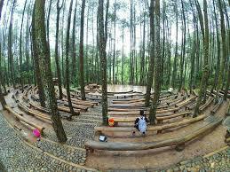 Hutan Pinus Mangunan Dlingo Bantul Spot Foto Yang Ngehits Di Instagram