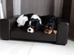 canap pour chien canapé chien panier chien canapé cuir chien freddylaurvpc fr