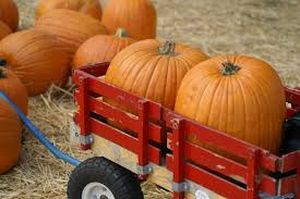 El Paso Pumpkin Patch by San Diego Pumpkin Patches Hay Wagon Rides And More La Jolla