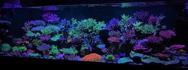 Coral Gallery Under Reef Aquarium LED • Orphek Aquarium LED Lighting 75 Gallon Tank Aquascape Ideas Please Reef Central Online Community Minimalist Aquascaping Page 3 2reef Saltwater And How To A Aquarium Youtube Tank Rockscape To Drill Cement Your Live Rock Gmacreef Columns In A Saltwater Callorecom Pieter Van Suijlekoms Revisited Is There Science Live Rock Sanctuary The Why I Involuntarily Redid My Mr 7
