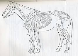 BKCLDHA Cool Horse Anatomy Coloring Book At Best All Coloring