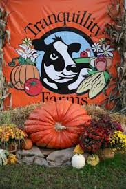 Local Pumpkin Farms In Nj by Pumpkin Patch Tranquillity Farms Andover New Jersey