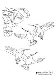 These Tiny Hummingbirds Are Looking For Flower Nectar To Eat The Big Birthday Calendar Book Large Print Adult Coloring Books Related