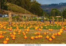 Pumpkin Patch Half Moon Bay Ca by Half Moon Bay Stock Photos U0026 Half Moon Bay Stock Images Alamy