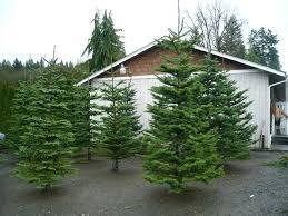 Noble Christmas Tree E6942172 Casual Trees Portland Astonishing Country Farm