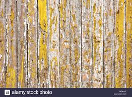 The Old Wooden Wall Painted With Yellow Color Cracking Peeling And Revealed Spike Nail
