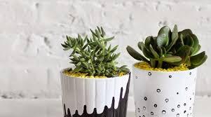 cache pot pour orchidee succulentes cactus en ceramique en blanc