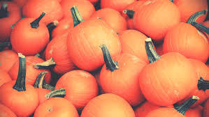 Pumpkin Patch Yucaipa Hours by How To Celebrate Thanksgiving In Los Angeles