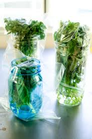 Freezing Pumpkin Puree In Glass Jars by How To Store Fresh Herbs The Pioneer Woman
