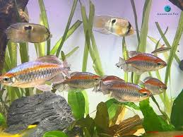 Aquascape - Twitter Search Adrie Baumann And Aquascaping Aqua Rebell Natural Httpwwwokeanosgrombgwpcoentuploads2012 Amazoncom Aquarium Plant Glass Pot Fish Tank Aquascape Everything About The Incredible Undwater Art Outstanding Saltwater Designs Photo Ideas Anubias Nana Petite Planted Freshwater Beautify Your Home With Unique For Large Fish Monstfishkeeperscom Scape Nature Stock 665323012