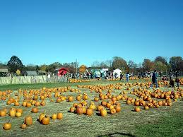 Pumpkin Picking In Ct jones family pumpkin farm in shelton ct