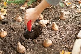 how to plant flower bulbs best flowers and 2017