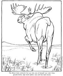 We Will Try To Make A Coloring Pages Become The Best Zoo For Printing And