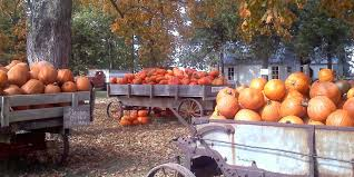 Pumpkin Picking In Ct by Pumpkin Patches Apple Orchards And Corn Mazes In Des Moines Area