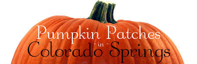 Pumpkin Patches In Colorado Springs 2014 by Patches In Colorado Springs Colorado