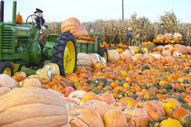 Fargo Moorhead Pumpkin Patches by Plethora Of Pumpkins Local News Stories Wahpetondailynews Com