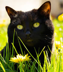 11 ways to rid of cats from your garden BT