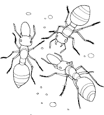 Modest Ant Coloring Page Free Downloads For Your KIDS