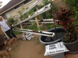 DIY Tips – Farming 4 Change Justines Aquaponics Which Cycles Water Through A Fish Pond And Hydroponics Systems With Fish An Post About Backyard Aquaponic Kijani Grows Will Bring Small Internet Connected Aquaponics Without Simple Diy Reviewhow To Make For Sale Visit My Personal Diy How To Design Home Best 25 Ideas On Pinterest Diy E A View Topic Lyndons System Expansion Ibc Razor Family Farms Review I Could Probably Start Growing Own Tilapia Exposed Photo On Cool