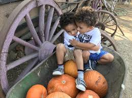 Pumpkin Patch Jefferson Blvd Culver City by 2017 Halloween Events In L A For Families Grapevinemom Com